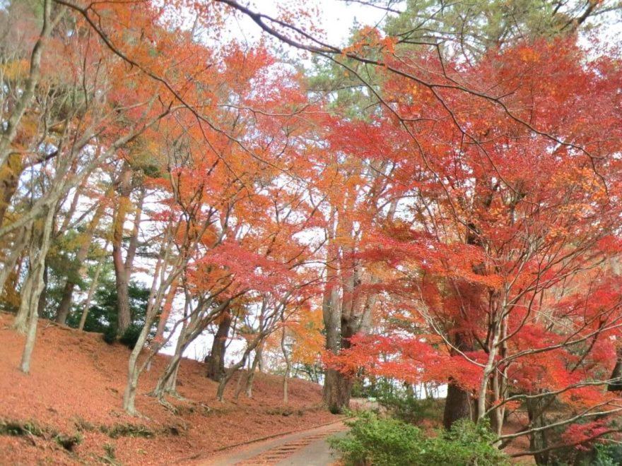 修善寺自然公園_cover