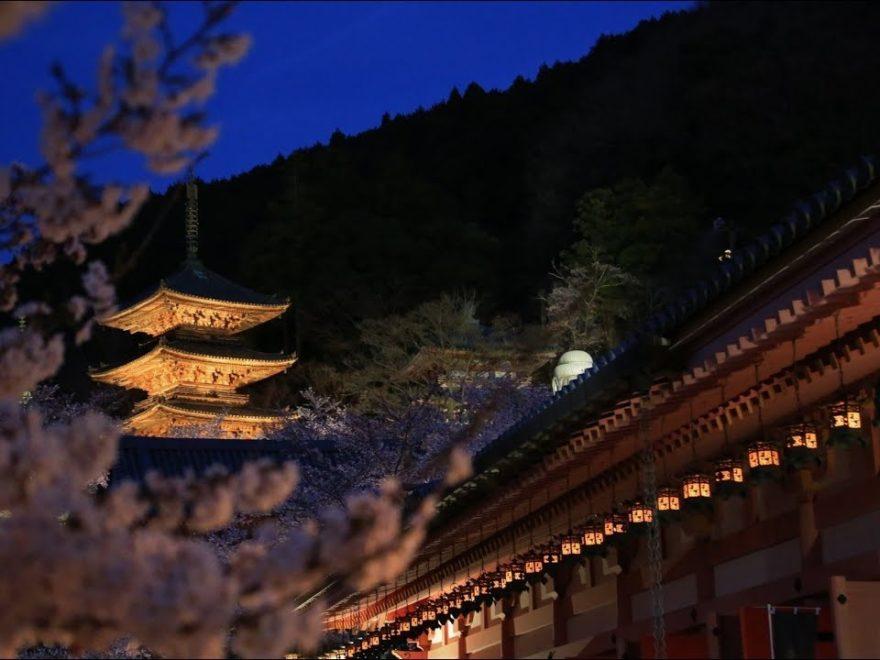 壷阪寺(奈良) | 2020年桜祭り・夜桜ライトアップ・見頃情報