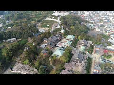 耕三寺(広島) | 2020年桜まつり・見頃情報