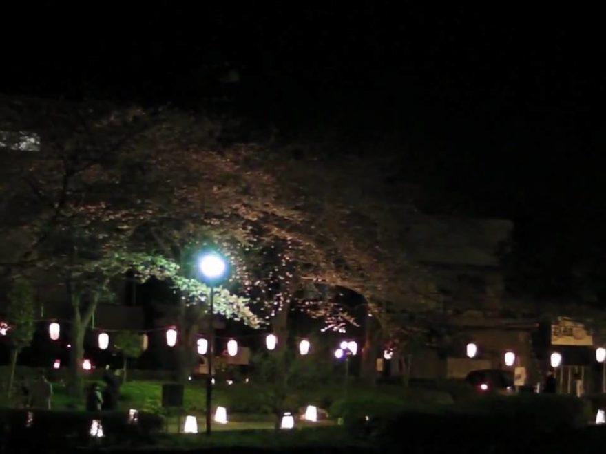 上沼公園・下沼公園(埼玉) | 2020年桜祭り・夜桜ライトアップ・見頃情報