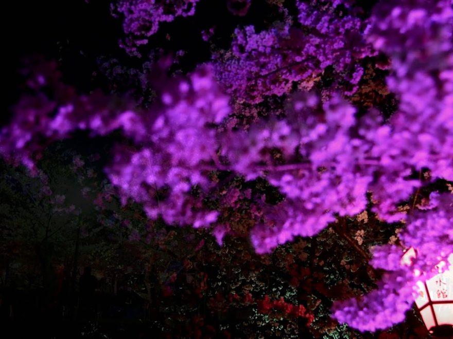 摂津峡公園(大阪) | 2020年桜祭り・夜桜ライトアップ・見頃情報