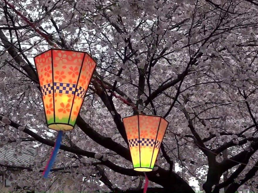 新川桜並木通り(栃木) | 2020年桜祭り・夜桜ライトアップ・見頃情報