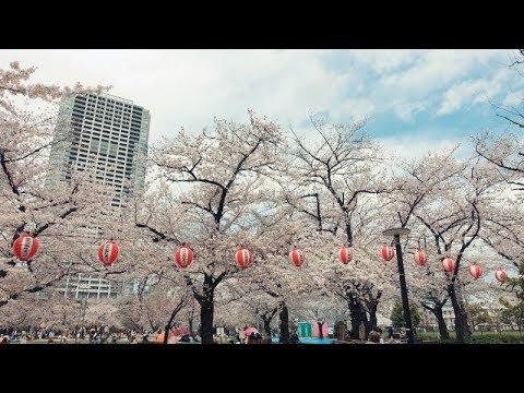 錦糸公園(東京) | 2020年桜祭り・夜桜ライトアップ・見頃情報