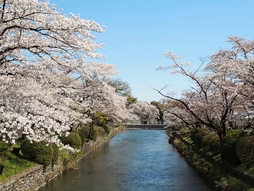 羽村堰(東京) | 2020年桜祭り・夜桜ライトアップ・見頃情報