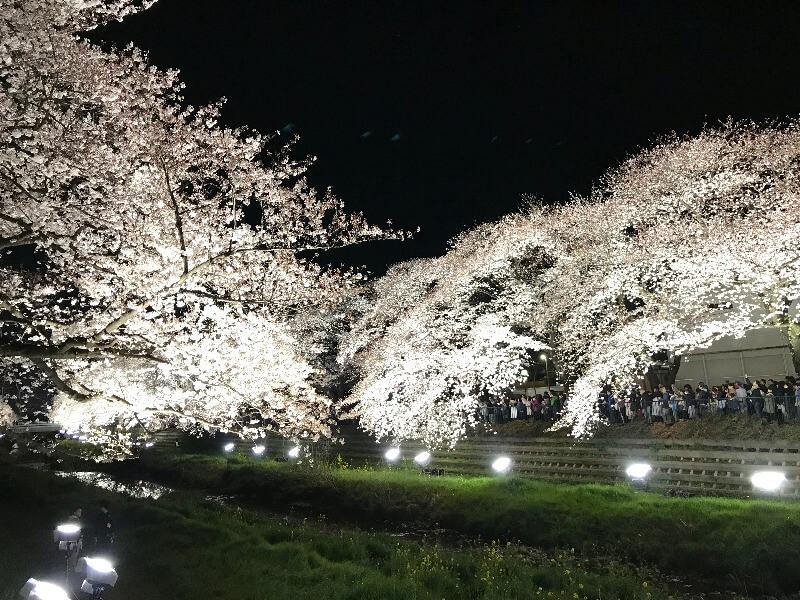 野川ライトアップ_007
