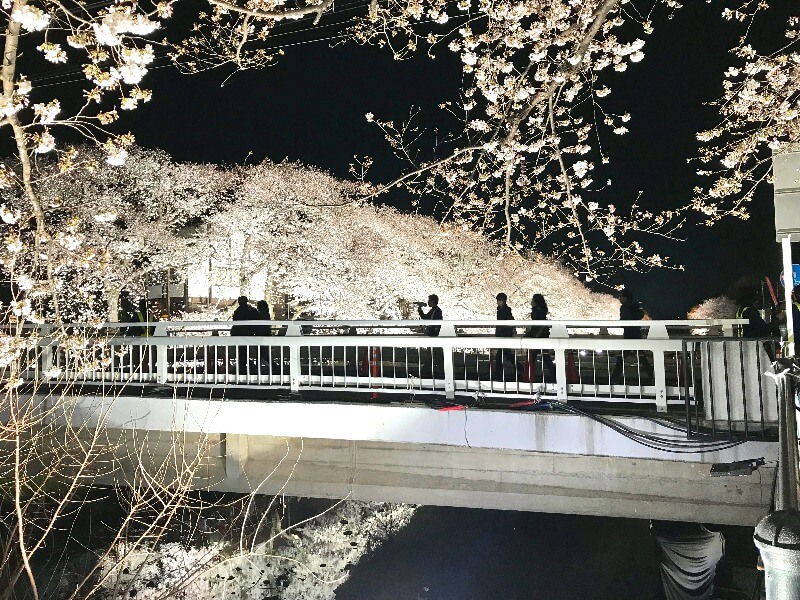 野川ライトアップ_橋