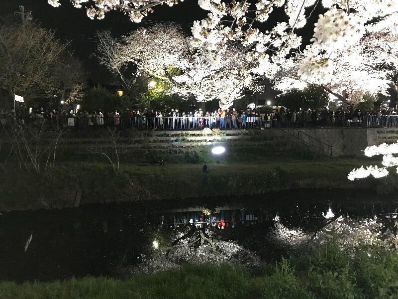 野川ライトアップ_水鏡