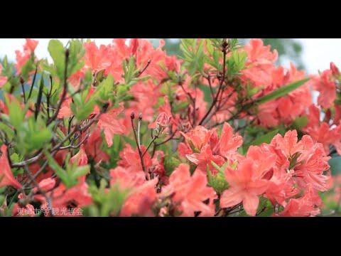 【中止】湯の丸高原(長野・群馬) | 2020年つつじ祭り・見頃情報