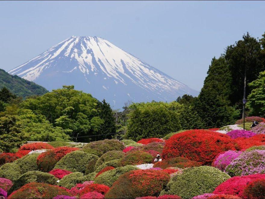 小田急 山のホテル(神奈川) | 2020年つつじ祭り・見頃情報