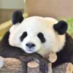 家でおすすめの癒し体験!動物園・水族館のライブカメラまとめ