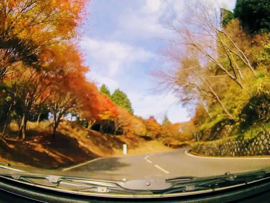 比叡山ドライブウェイ(滋賀) | 2020年紅葉ライトアップ・見頃情報