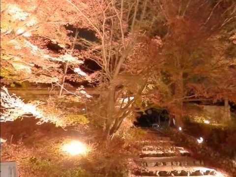 出雲大神宮(京都) | 2020年紅葉ライトアップ・見頃情報