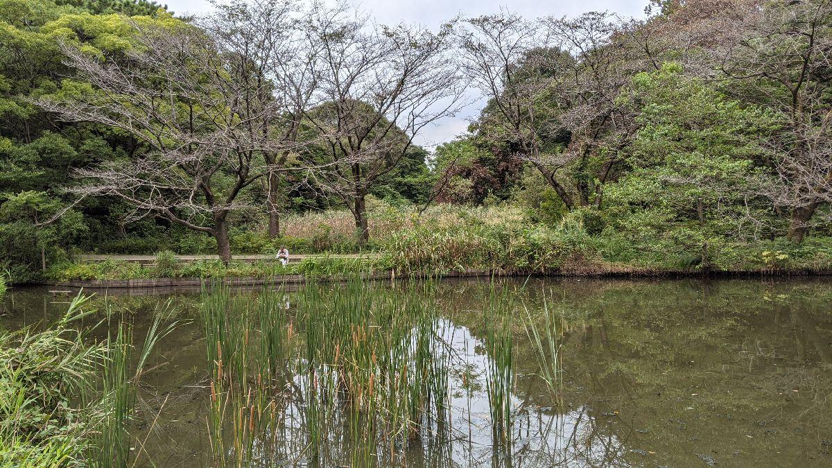 自然教育園の森
