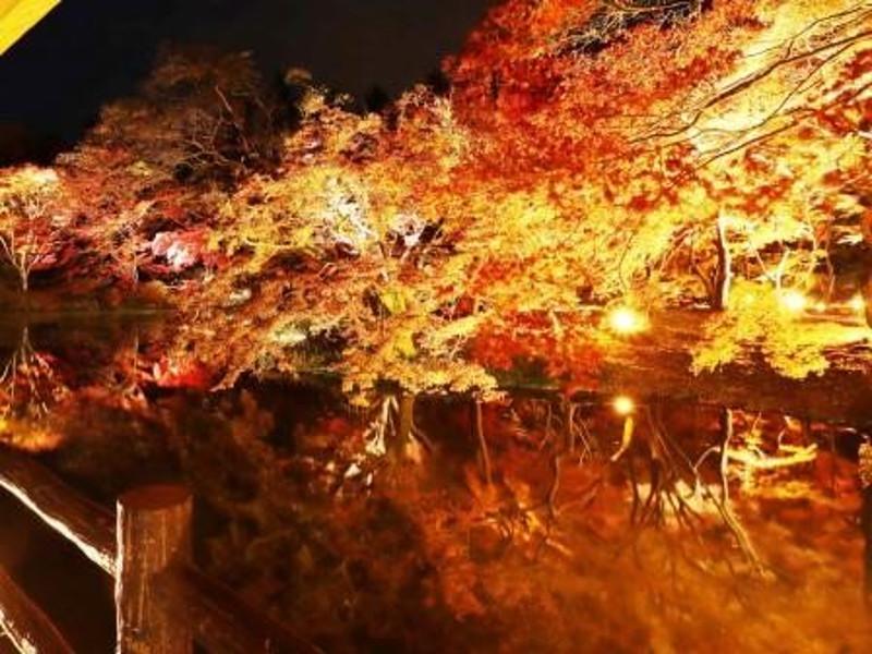 京都府立植物園(京都) | 2020年紅葉ライトアップ・見頃情報