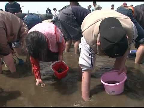 東扇島東公園 かわさきの浜(神奈川県川崎市) | 2021年潮干狩り情報