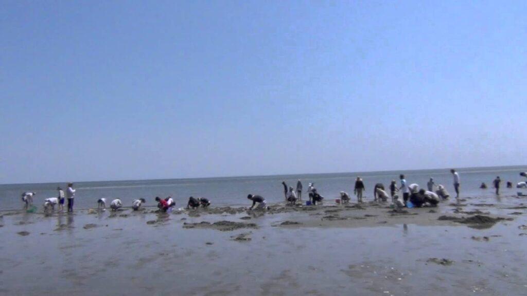 香良洲(からす)海岸(三重県津市)   2021年潮干狩り情報