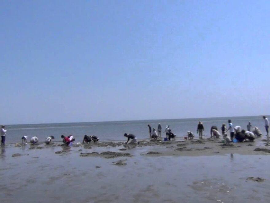 香良洲(からす)海岸(三重県津市) | 2021年潮干狩り情報
