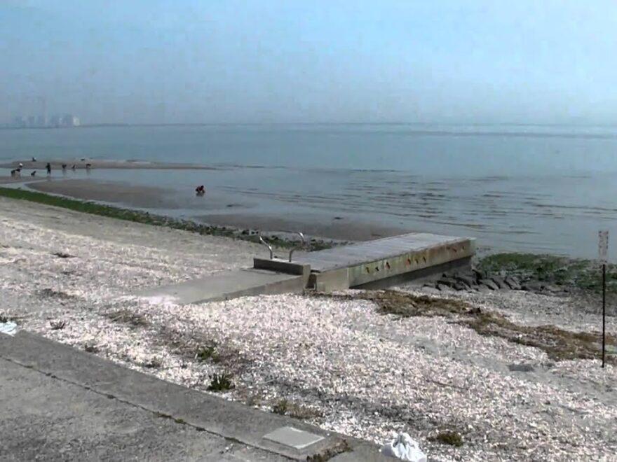 河和口(こうわぐち)潮干狩り場(愛知県美浜町) | 2021年潮干狩り情報