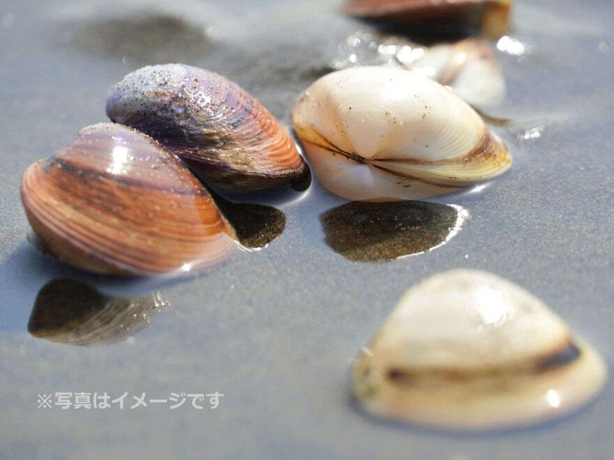 潮干狩り_イメージ画像