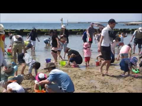 二色の浜(大阪府貝塚市)   2021年潮干狩り情報