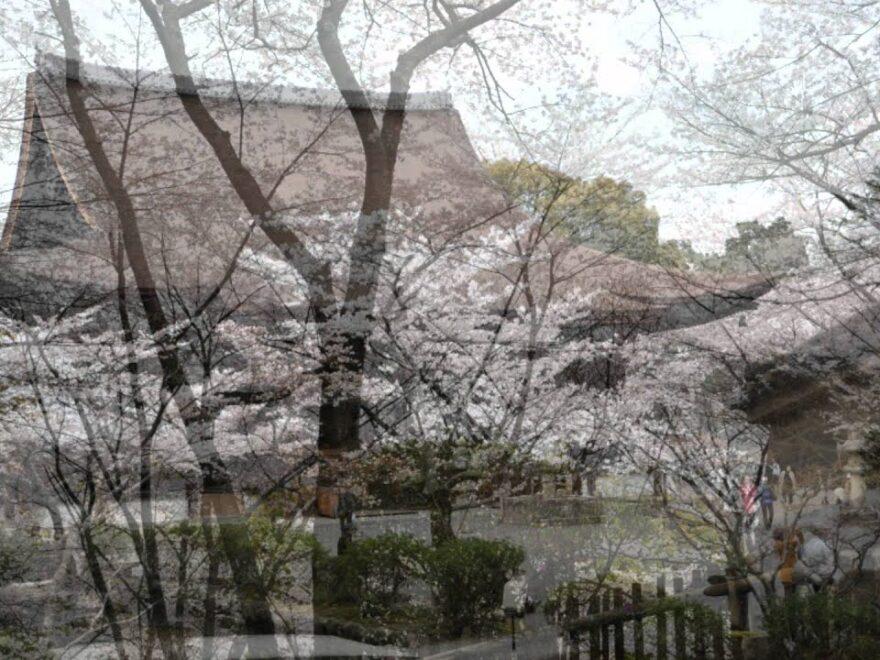 三井寺(園城寺)(滋賀) | 2021年桜祭り・夜桜ライトアップ・見頃情報