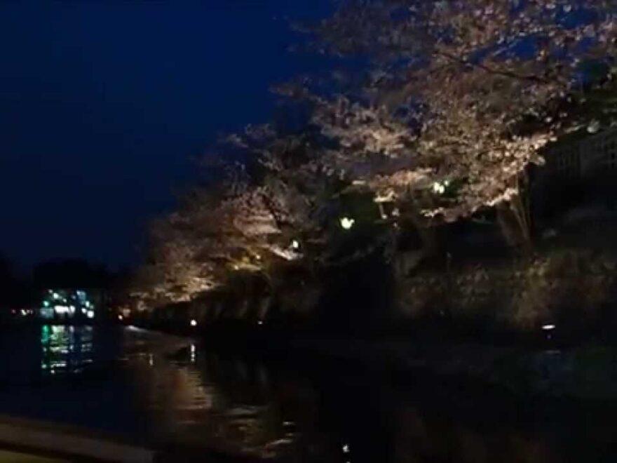 京都岡崎疏水(京都) | 2021年桜祭り・夜桜ライトアップ・見頃情報