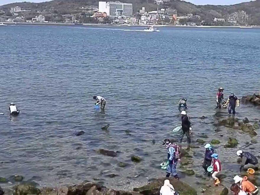 梶島(愛知県西尾市) | 2021年潮干狩り情報
