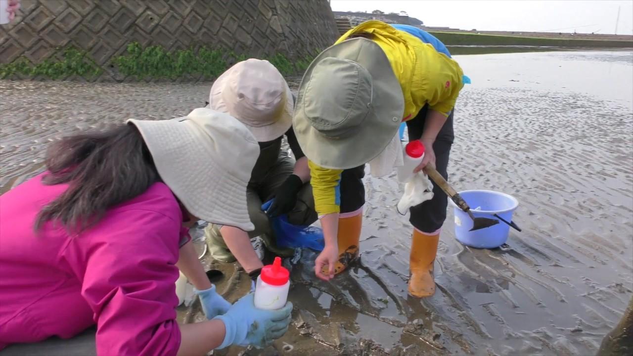 【中止】松江浦海岸(福岡県豊前市)   2021年潮干狩り情報