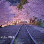 【中止】蹴上インクライン(京都)   2021年夜桜ライトアップ・見頃情報
