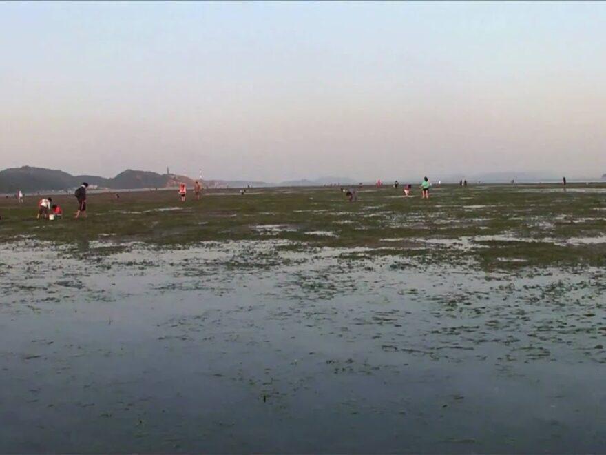 高州の浅瀬(岡山県倉敷市) | 2021年潮干狩り情報