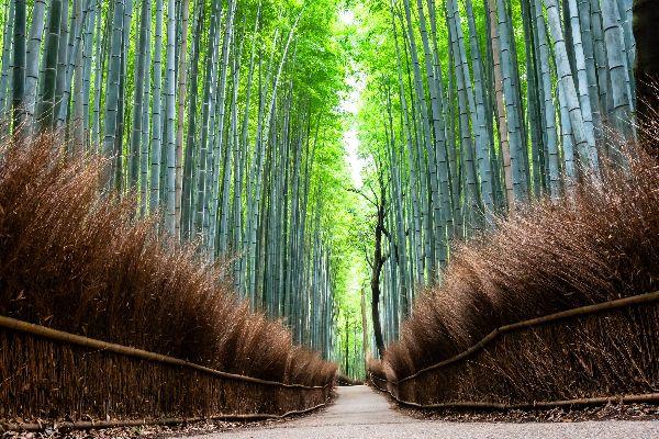 嵐山ツアーイメージ