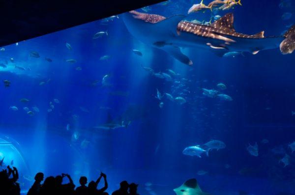 沖縄美ら海水族館_黒潮の海_大水槽