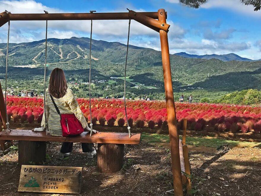 ひるがのピクニックガーデン(岐阜県郡上市) | 2021年コキアの紅葉イベント・見頃情報